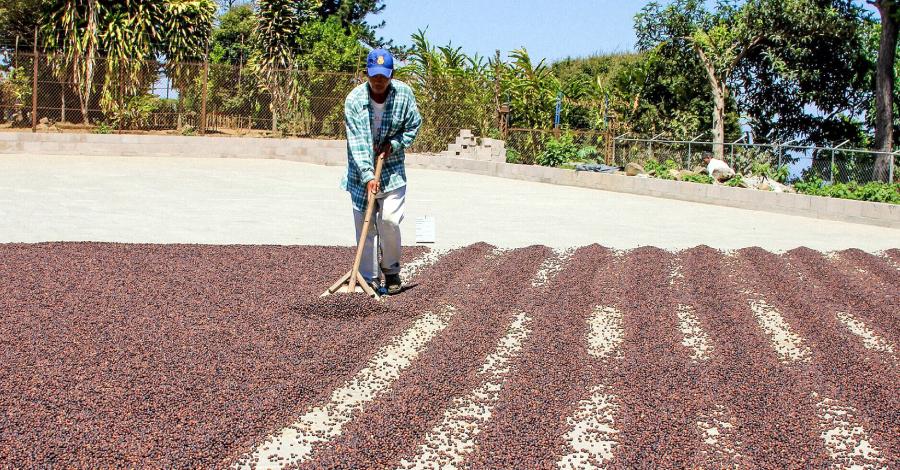 Obróbka kawy na sucho